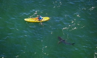 Shark Attacks Kayak
